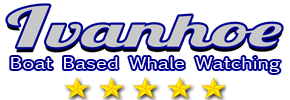 Whale Watching in South Africa, Cape Town, Hermanus, Gansbaai - Walker Bay