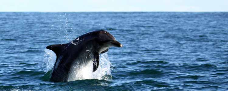Ivanhoe-Sea-Safaris-Eco-Dolphine
