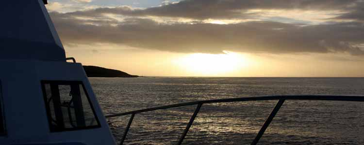 Ivanhoe-Sea-Safaris-Whale-Sunset