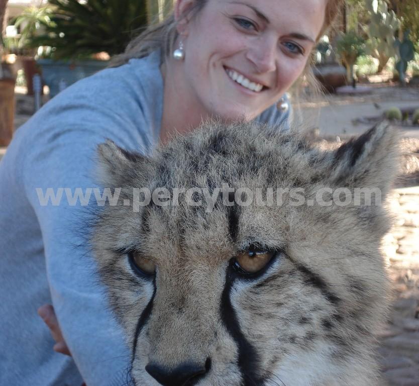 Cheetah-Safari-near-Hermanus-