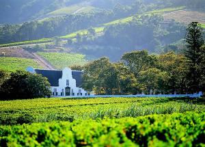 constantia-winelands-big-300x215