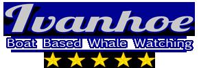 Whale Watching in South Africa, Cape Town, Hermanus, Gansbaai - Walker Bay