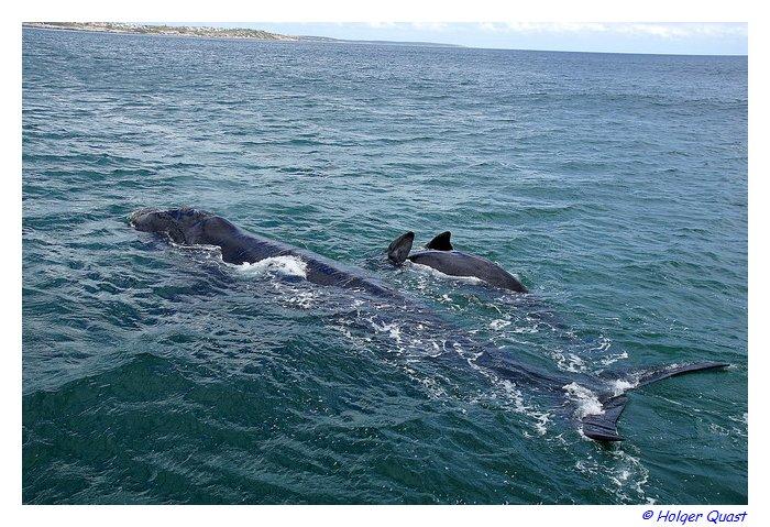 Whale Watching Mattierungsgruppe