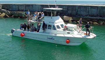 Boat Based Whale Watching - Ivanhoe Sea Safaris