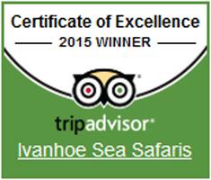 Ivanhoe-Winner-2015-235x200