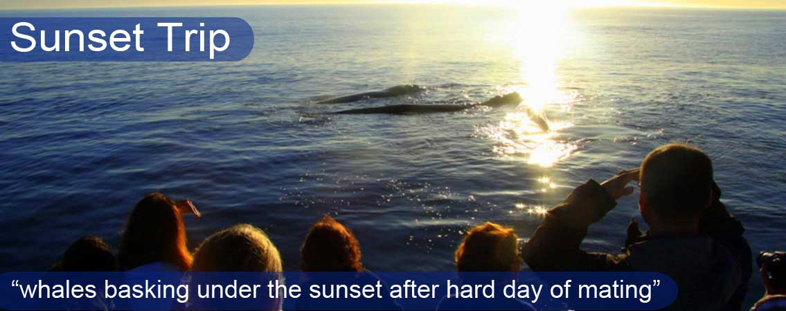 Sunset-Whales2