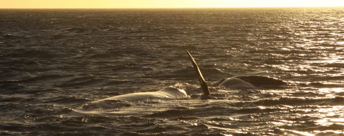 Whale-4