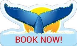 Hermanus Whale Watching - Book Now