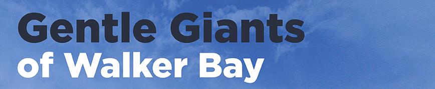 gentle giants header