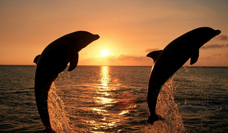 Dolphin watching Cape Town