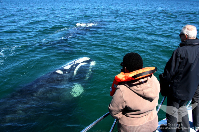 Whale viewing
