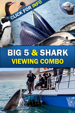 Big 5 Shark combo small