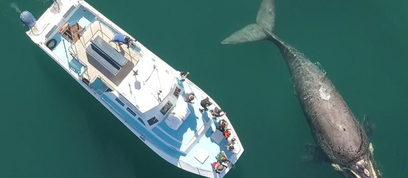 Whale Overhead