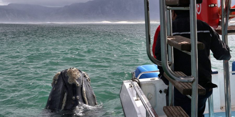 7th-Sept - Whale Watching Trip with Ivanheo Sea Safaris