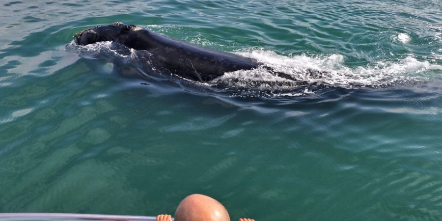 Close Encounter of a Southern Right Whale