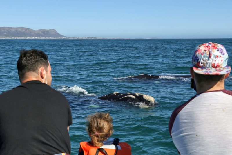 Whale Watching in Gansbaai, South Africa