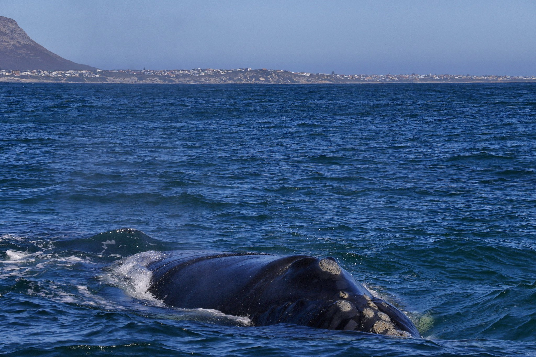 Gansbaai South Africa Whale watching