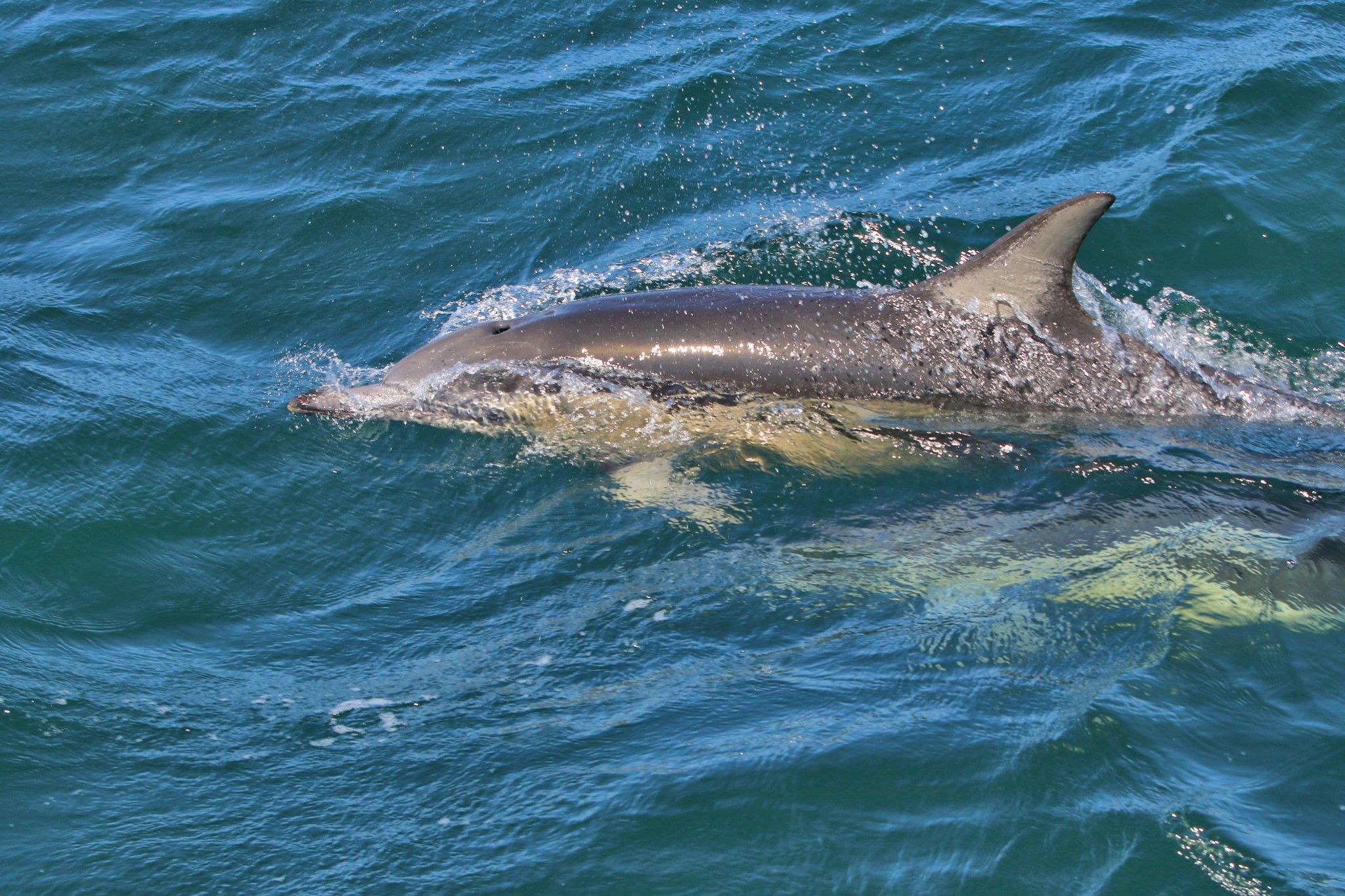 Dolphin watching south Africa