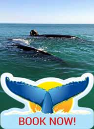Whale Watching Prices