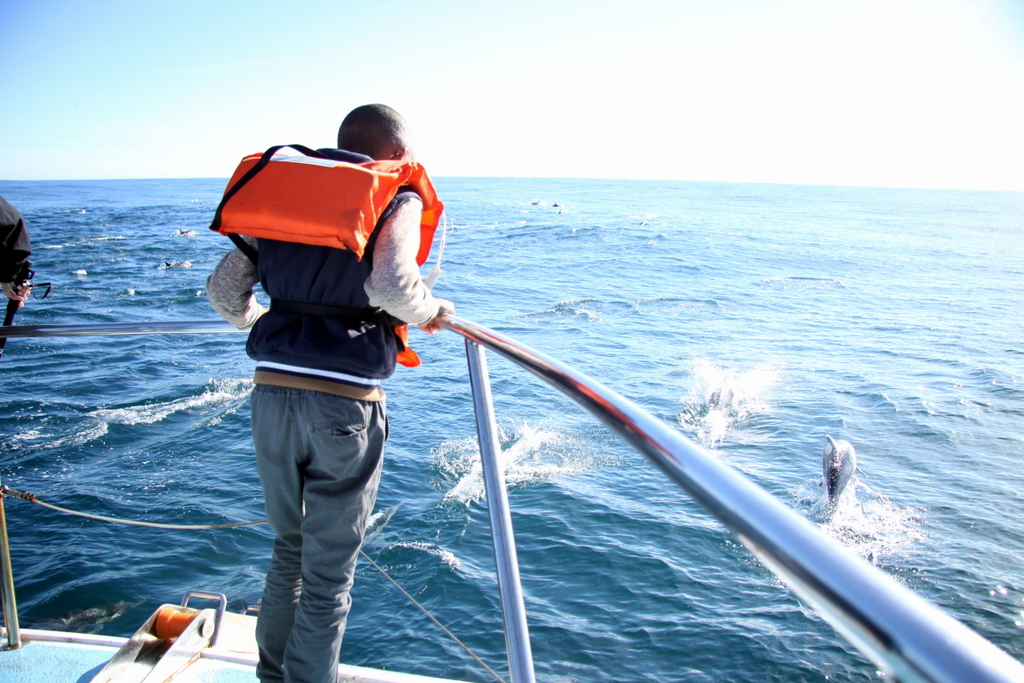 Whale Watching Tour Cape Town - Dolphin