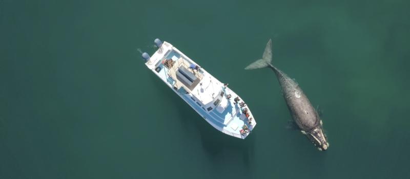 Hermanus Whale Watching Boat Trip