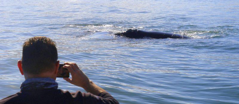 Hermanus Whale Sightings - Front Deck of Ivanhoe