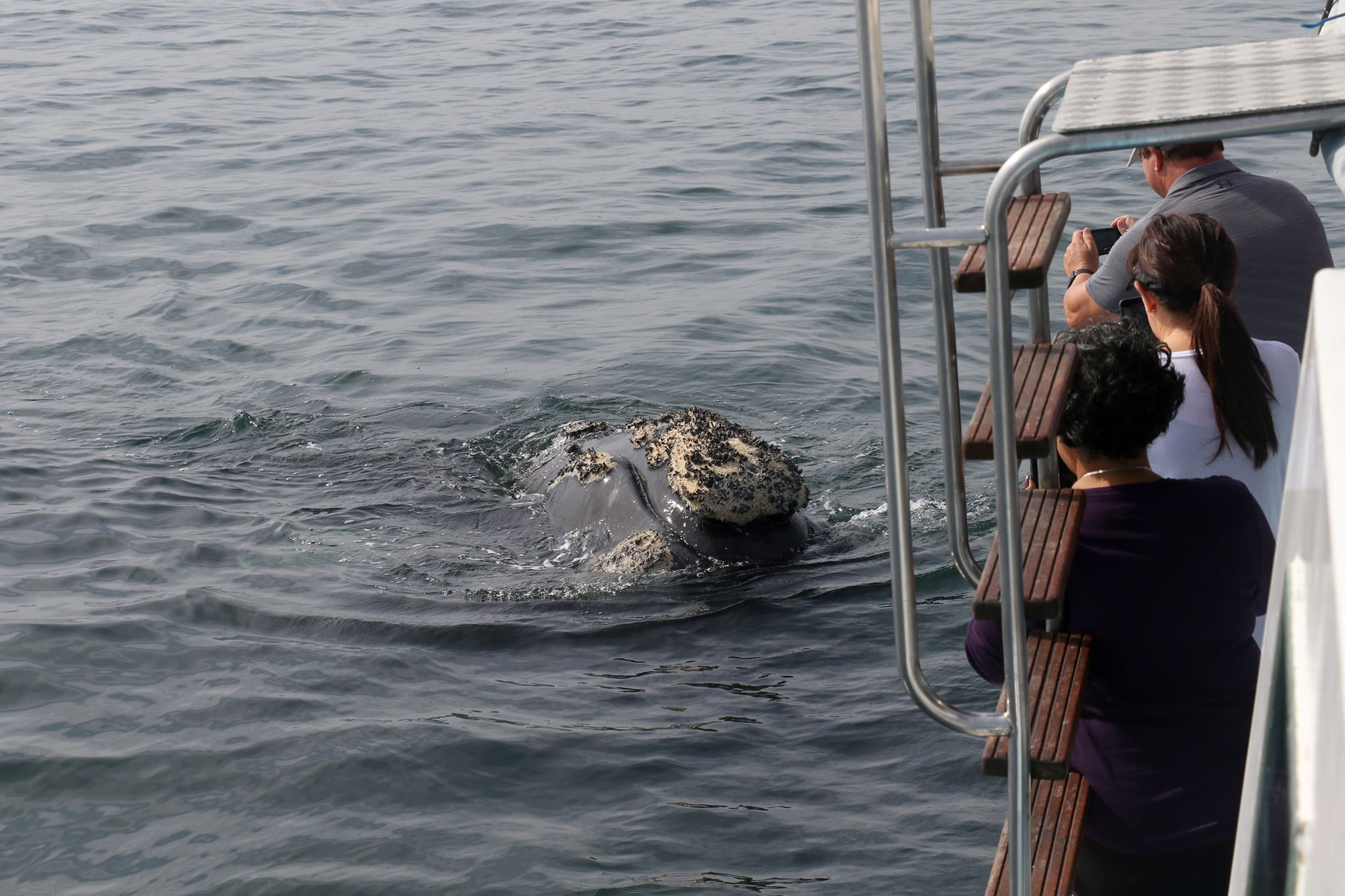 Best whale watching close encounters