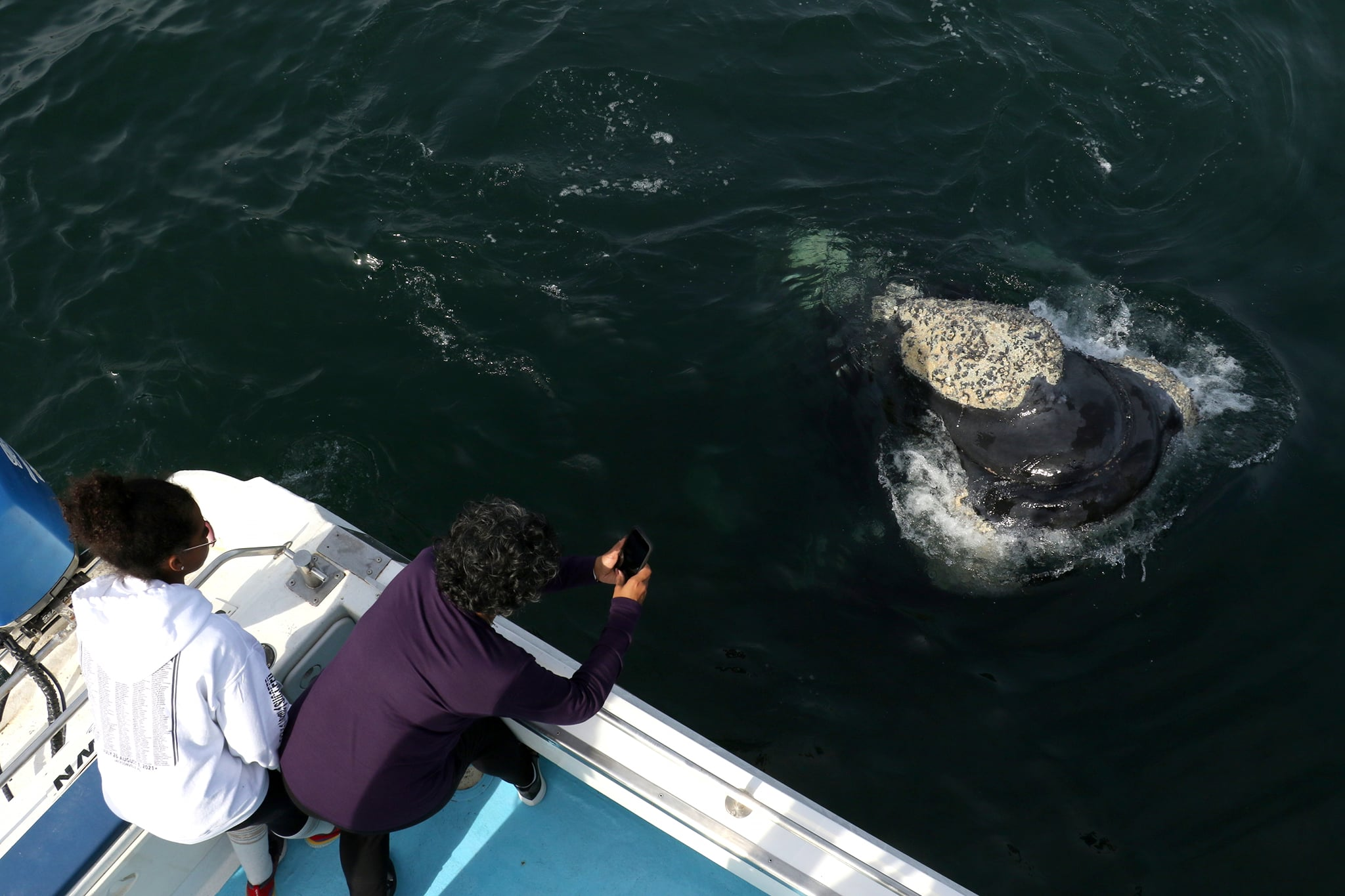 Best Whale close encounters